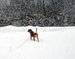 Sophie_snow11809b
