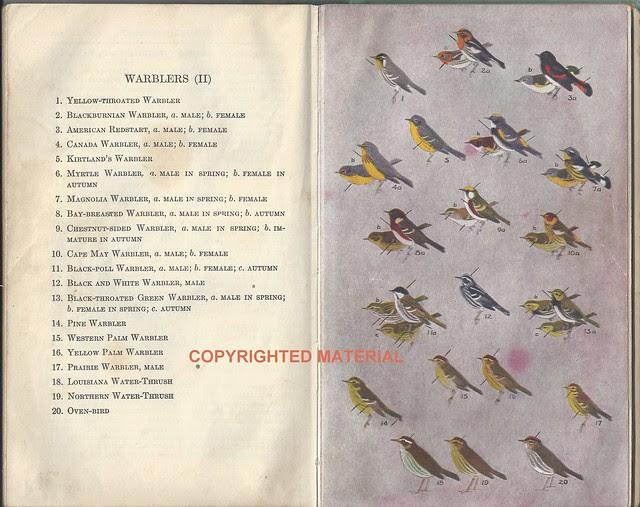 Peterson Warblers 1939