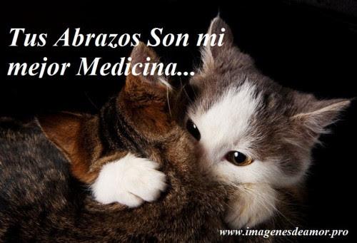 Snap Ima Genes De Gatitos Bebe Tiernos Gatitos Dulces Con Frases De