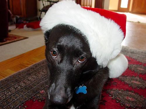 christmas dog santa hat
