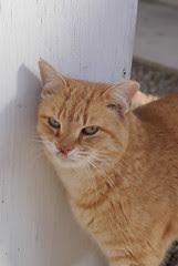 Sun Porch Cat Cliff