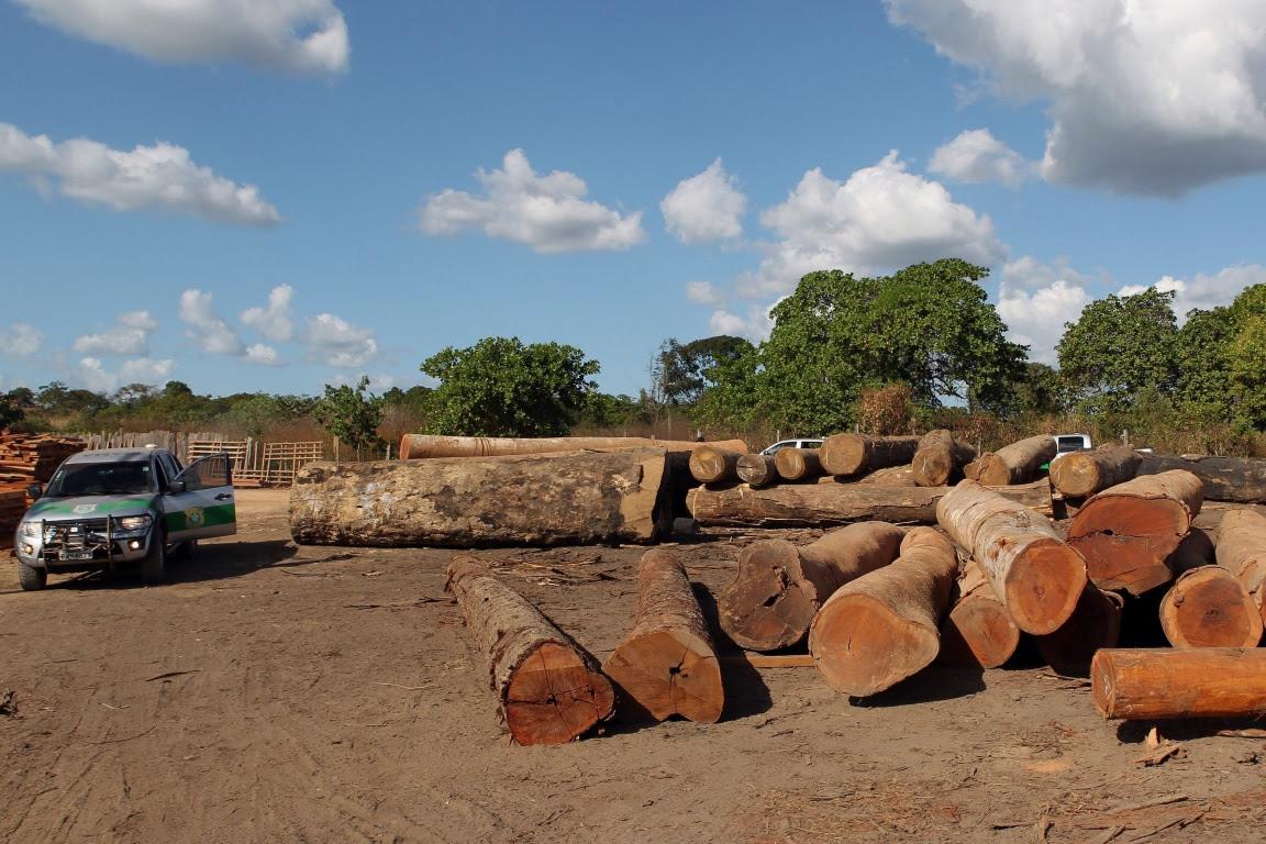 A fraude no sistema eletrônico DOF do Ibama possibilitava a comercialização de madeiras extraídas de forma ilegal. Foto: Ibama.