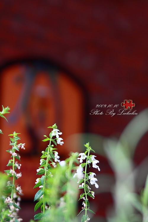 The DOOR樂多|三峽北大大學路美式餐廳|近台北大學
