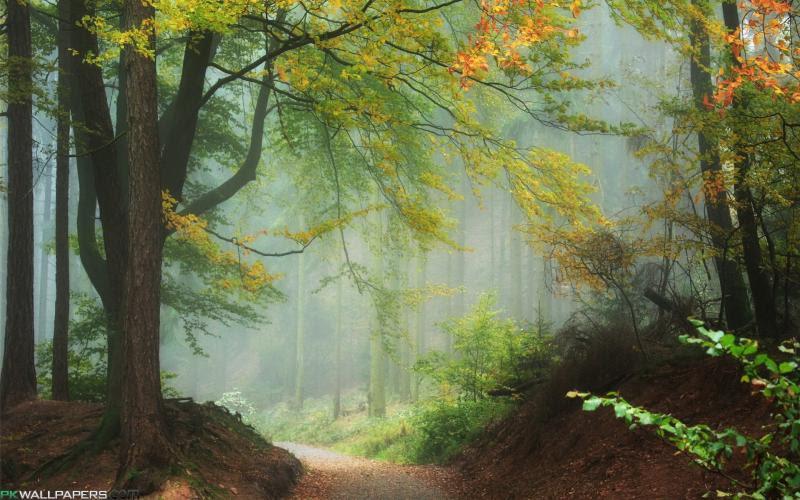 Misty forest туманный лес игровой автомат