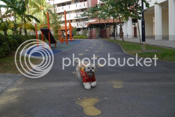 photo P1000172_zps641944e2.jpg