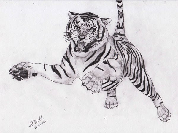 Dibujos Reales De Animales A Lapiz Imagui