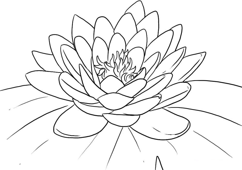 Dibujos De Flor De Loto Para Colorear E Imprimir