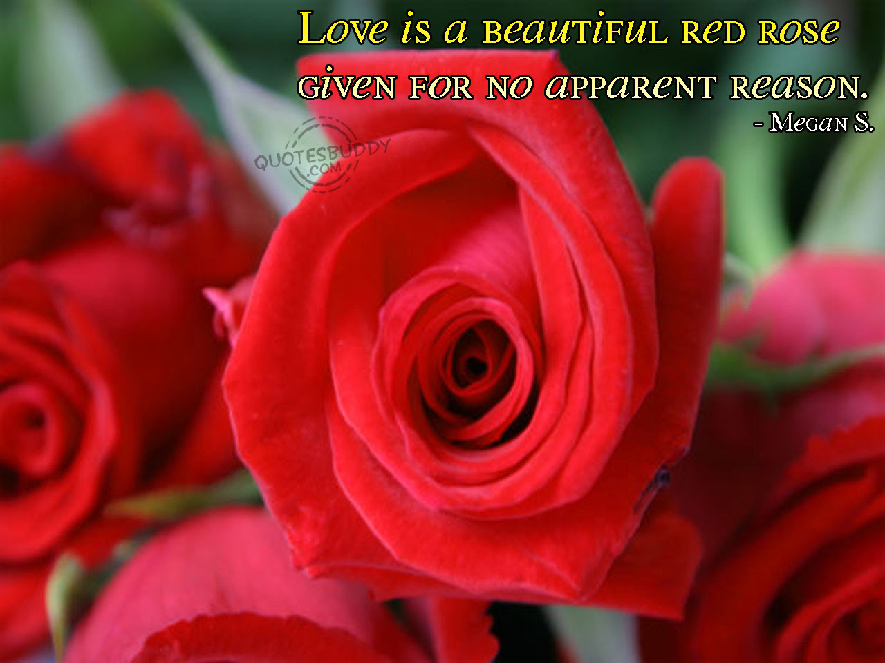 Quotes About Red Rose 53 Quotes
