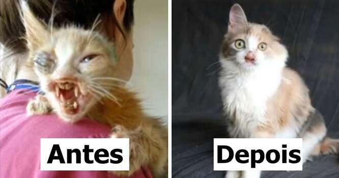 As pessoas ficavam aterrorizadas ao olharem para este gatinho, até que uma menina de 7 anos mudou sua vida para sempre
