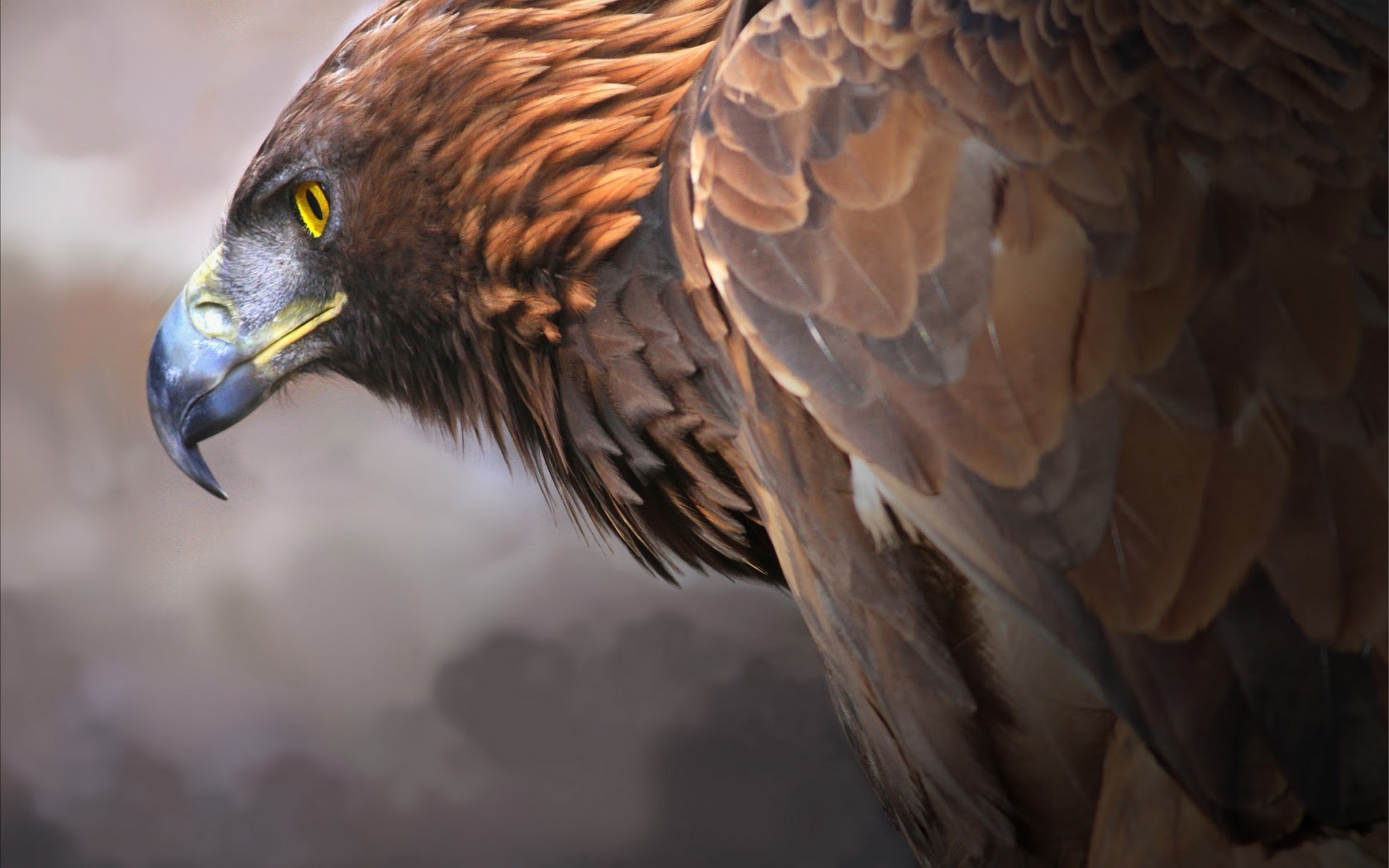Eagle Digital Art 2, HD Artist, 4k Wallpapers, Images ...