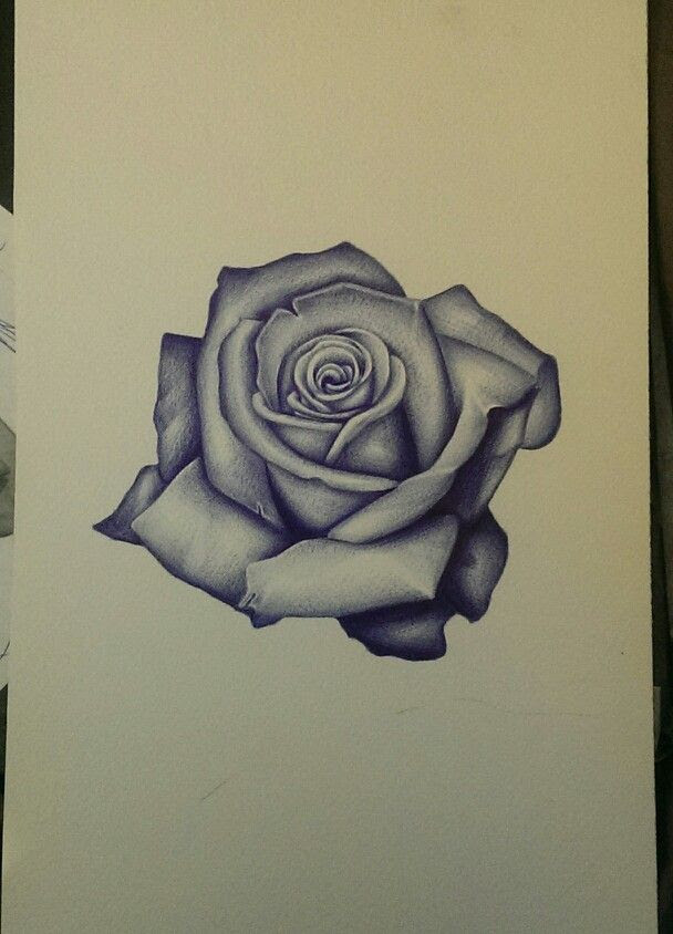 Black And Grey Realistic Rose Tattoo Design