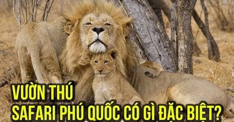 Du lịch Phú Quốc: vườn thú Vinpearl Safari Phú Quốc có gì vui ?