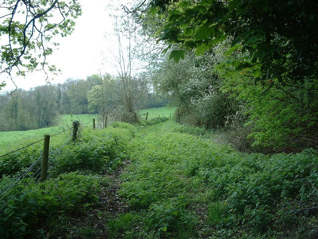 File:Mind the Nettles - geograph.org.uk - 163820.jpg