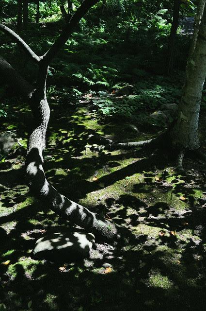 Stream Garden (2)