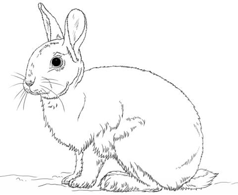 Dibujo De Precioso Conejo Para Colorear Dibujos Para Colorear