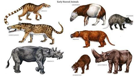 Early Hoofed Animals   Prehistoric Mammals   Pinterest   Animals