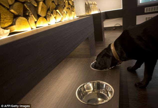 Lapping it up: A happy customer tucks into a bowl of gourmet food at the Pets Deli restaurant for cats and dogs in Berlin, German