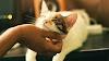 Trucos para caerle bien a un gato