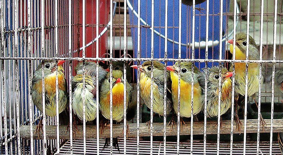 Mon - Fe 17, 2014 photo Birdies-4---with-YK_zps69300303.jpg