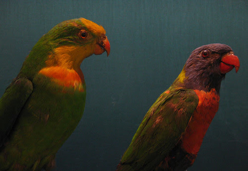 booth museum parrots