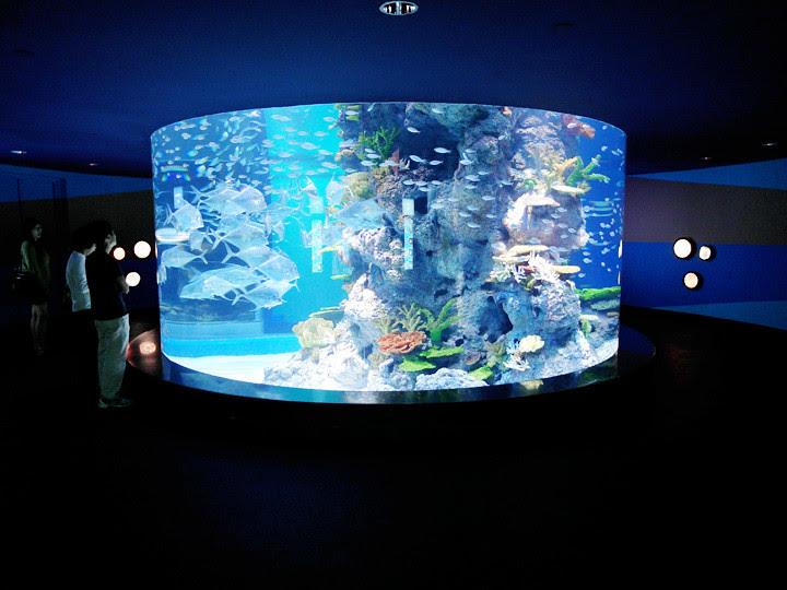 inside S.E.A. Aquarium world's largest aquarium