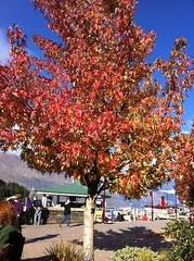 Queenstown Autumn