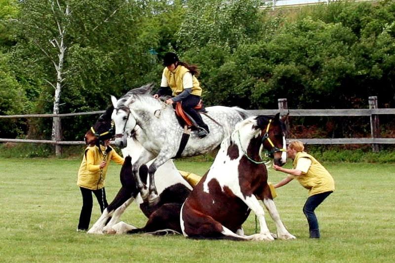Mandala malvorlagen tiere mandala pferd pferd ausmalen malvorlagen für jugendliche disney prinzessin malvorlagen mandala zum ausdrucken malvorlage einhorn malvorlagen pferde. 18 Elegant Ausmalbilder Pferde Haflinger