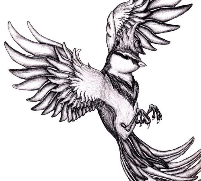 vögel zum nachmalen  tier malen