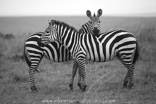 Stripes by Megan Lorenz