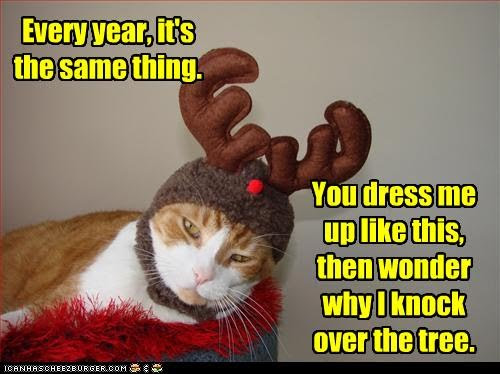 photo of a cat dressed as a reindeer