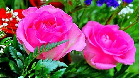 Wallpapers For Desktop Rose Flower