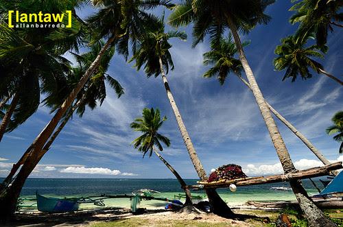 Tambisan Coconut Trees