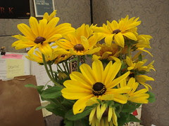 another view of blackeyed susans