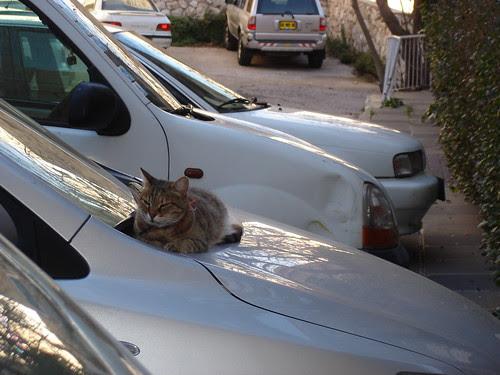 Kitty on a car