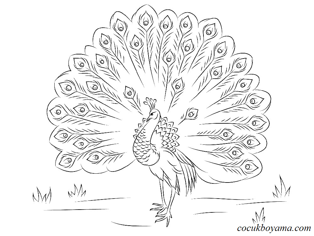 Attractive Peacock Coloring Page Stock Vector C Kchungtw 95581300