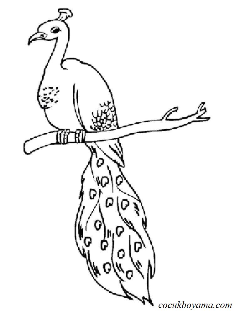 Tavus Kuşu 26 ücretsiz Boyama Resimleri