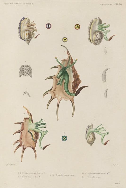 Voyage de la Corvette (atlas) by Jules Dumont d'Urville, 1833 109