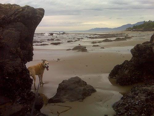 Goldie just before we got kicked off beach