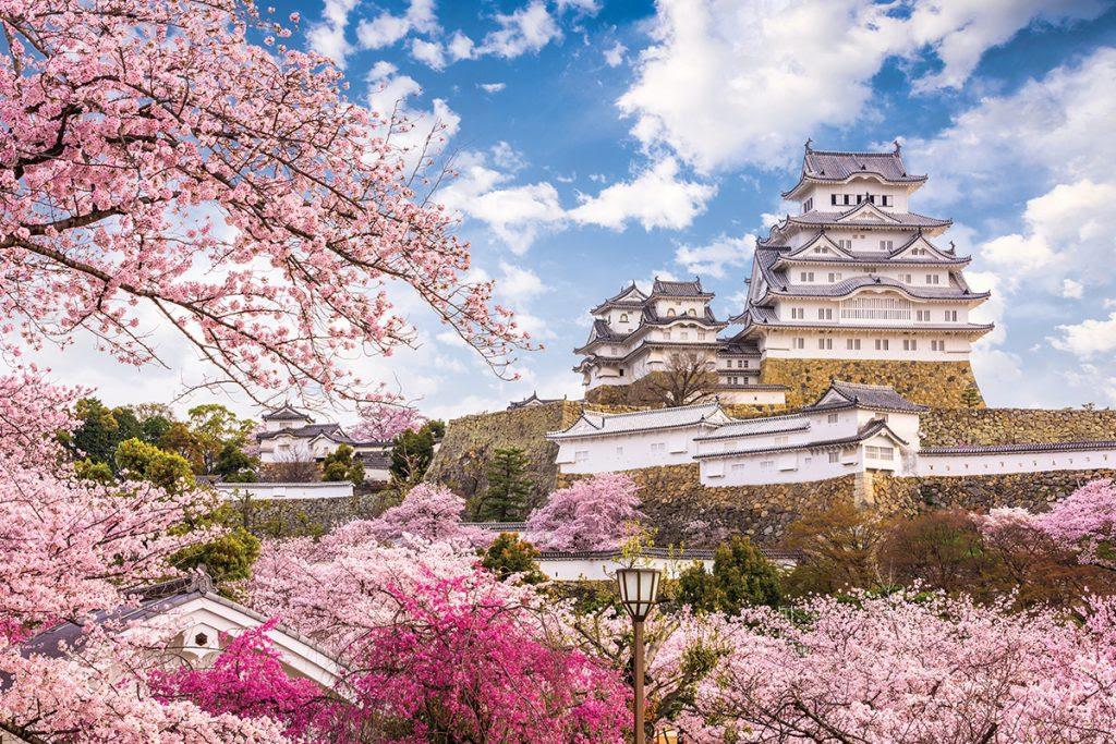Japon Bajo La Flor Del Cerezo Jet News