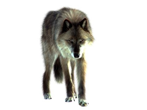 png wolf  itsdura  deviantart