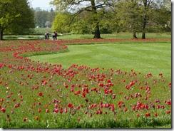 02 tulipani