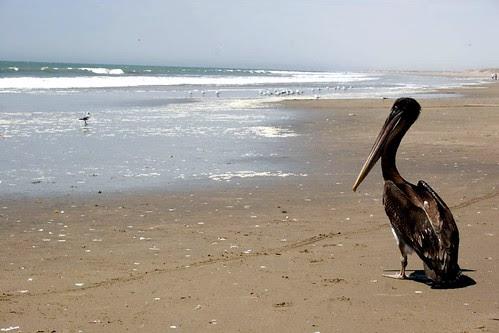 Playa Chulliyache - Sechura (Piura)