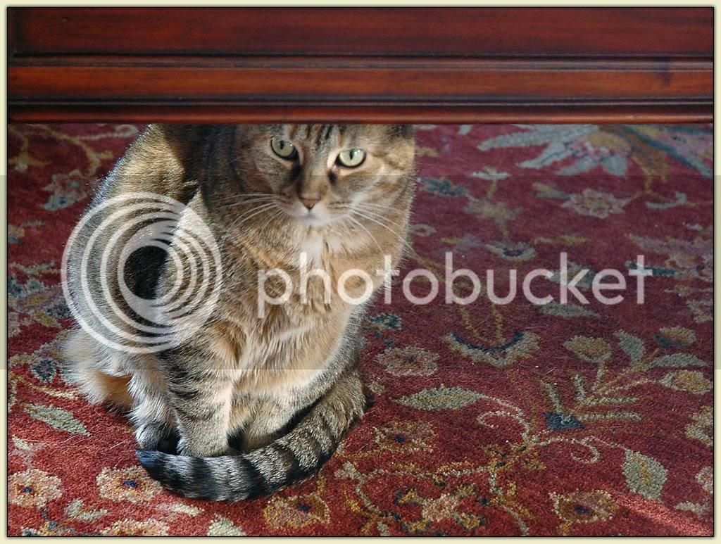 Sammy under the Table