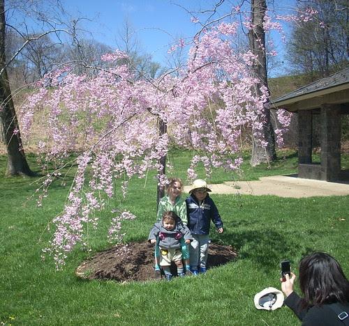 Kids under cherry tree