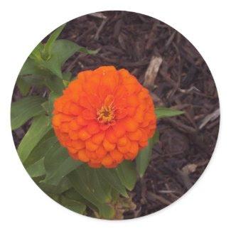 Marigold Classic Round Sticker