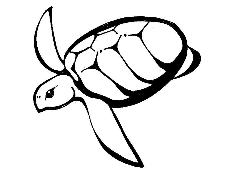 Free Hawaiian Turtle Cliparts Download Free Clip Art Free Clip Art