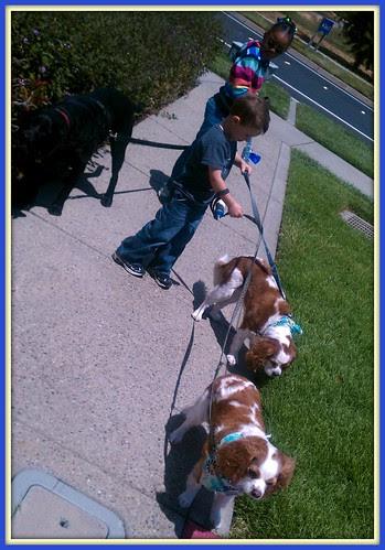 Doggie walkers