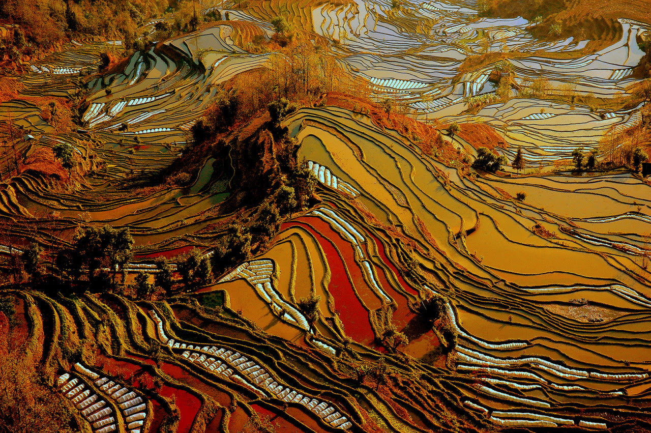 wnycradiolab:   the remote and little known rice terraces of yuanyang county in china's yunnan province were built by the hani people along the contours of ailao mountain range during the ming dynasty five hundred years ago. the terraces, once planted during the early spring season, are then irrigated with spring water from the forest above, which reflect sunlight to create the images seen here. photos by jialiang gao, javarman, isabelle chauvel and thierry bornier    A work of art created by fields of rice.