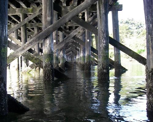 2008-05-04 Portage Inlet 012
