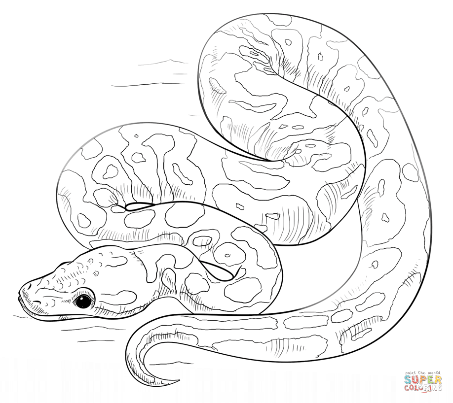 Dibujos De Serpientes Para Colorear Páginas Para Imprimir Y
